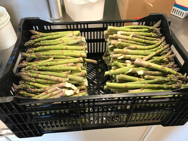 fresh asparagus delivered from Norconk Farms and to be served for school lunch